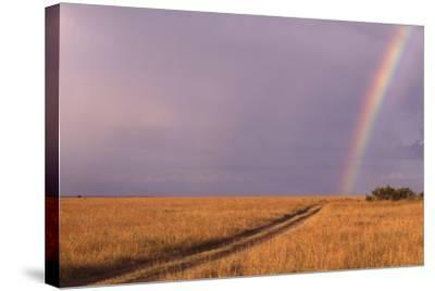 Rainbow on the Savanna-DLILLC-Stretched Canvas Print