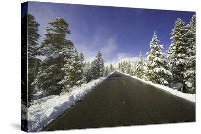 Mountain Highway among Snowy Trees in Inyo National Forest-Momatiuk - Eastcott-Stretched Canvas Print