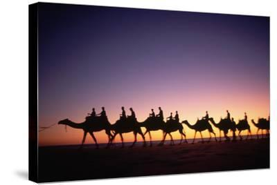 Camels on Beach at Sunset-Paul Souders-Stretched Canvas Print
