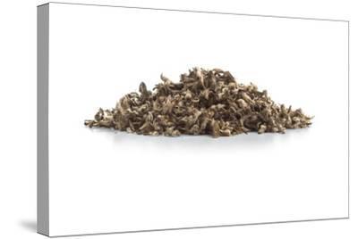 Dry Tea-Fabio Petroni-Stretched Canvas Print