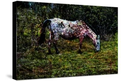 Piebald--Stretched Canvas Print