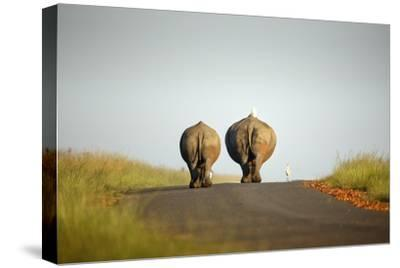 White Rhinos Walking on Road, Rietvlei Nature Reserve-Richard Du Toit-Stretched Canvas Print