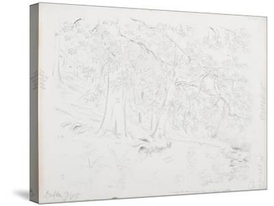 C.1916-Daniel Oliver-Stretched Canvas Print