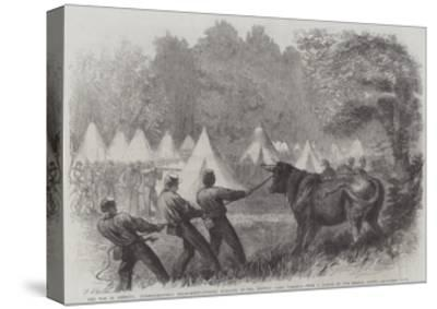 The War in America, Quartermaster's Department, Killing Bullocks in the Federal Camp, Virginia-Frederick John Skill-Stretched Canvas Print
