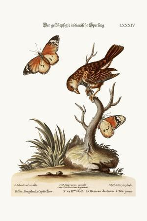 The Yellow-Headed Indian Sparrow, 1749-73-George Edwards-Stretched Canvas Print