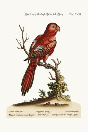 The Long-Tailed Scarlet Lory, 1749-73-George Edwards-Stretched Canvas Print