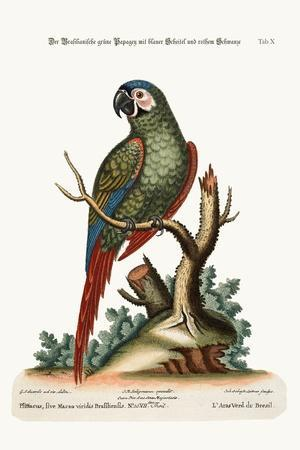 The Brasilian Green Maccaw, 1749-73-George Edwards-Stretched Canvas Print