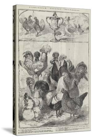 Birmingham Poultry Show-Harrison William Weir-Stretched Canvas Print