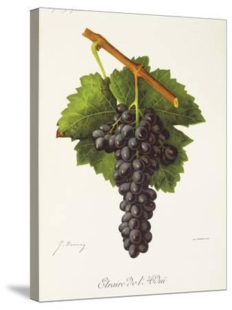Etraire Del'Adui Grape-J. Troncy-Stretched Canvas Print