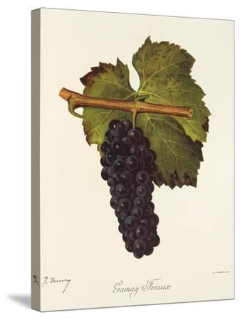 Gamay Freaux Grape-J. Troncy-Stretched Canvas Print