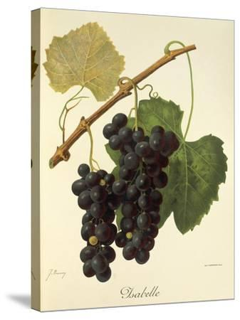 Isabelle Grape-J. Troncy-Stretched Canvas Print