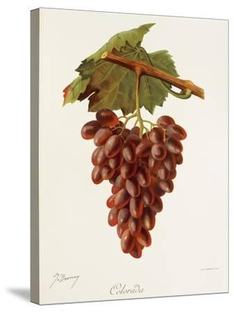 Colourada Grape-J. Troncy-Stretched Canvas Print