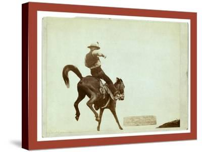 Bucking Bronco. Ned Coy-John C. H. Grabill-Stretched Canvas Print