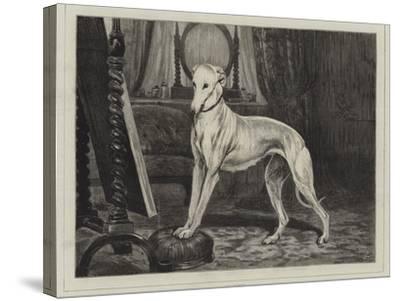 Vanity-John Charlton-Stretched Canvas Print