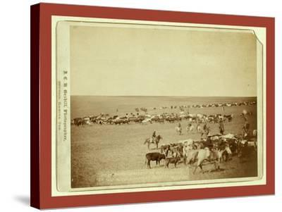Round-Up Scenes on Belle Fouche [Sic] in 1887-John C. H. Grabill-Stretched Canvas Print