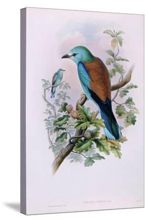 European Roller; Coracias Garrula, 1862-1873 (Hand-Finished Colour Lithograph)-John Gould-Stretched Canvas Print