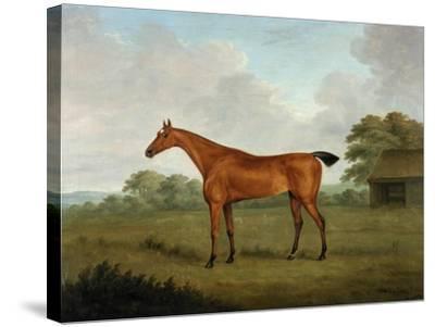 Chestnut Horse in a Landscape, 1815-John Nott Sartorius-Stretched Canvas Print