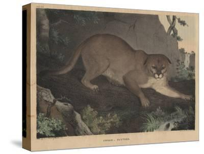 Cougar or Panther-Mannevillette Elihu Dearing Brown-Stretched Canvas Print