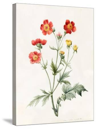 Composite, 1827-Louise D'Orleans-Stretched Canvas Print