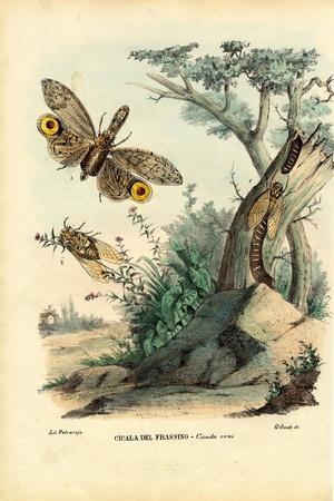 Peanut-Head Bug, 1863-79-Raimundo Petraroja-Stretched Canvas Print
