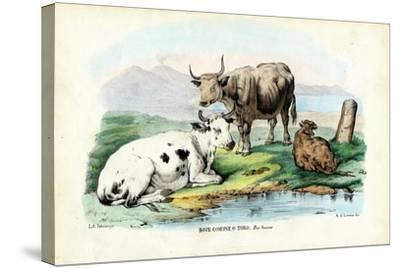 Cattle, 1863-79-Raimundo Petraroja-Stretched Canvas Print