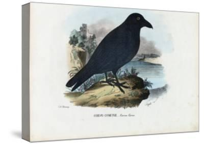 Raven, 1863-79-Raimundo Petraroja-Stretched Canvas Print