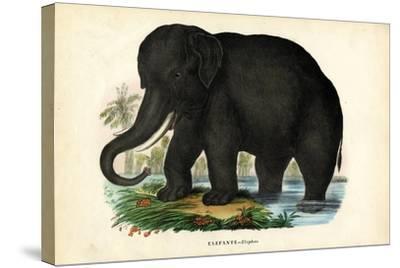 Asian Elephant, 1863-79-Raimundo Petraroja-Stretched Canvas Print