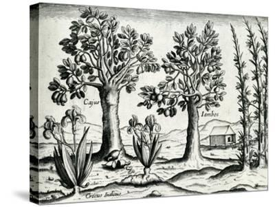 Landscape from 'India Orientalis', 1598-Theodore de Bry-Stretched Canvas Print
