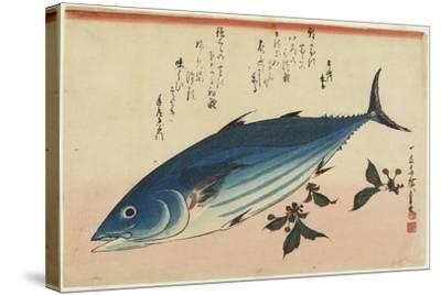 Bonito and Cherry Leaves, 1832-1833-Utagawa Hiroshige-Stretched Canvas Print