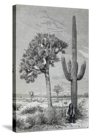 Arizona Desert Landscape with Cactus and Yucca Plants, USA, 19th Century--Stretched Canvas Print
