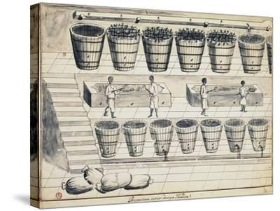 Processing Cycle for Extracting Sugar from Beet, Watercolor, Portugal, 19th Century--Stretched Canvas Print