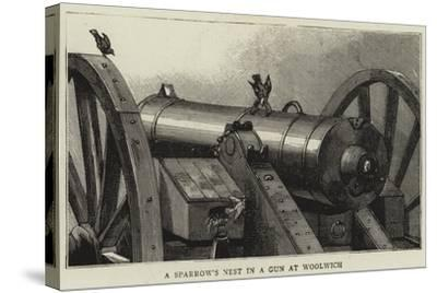 A Sparrow's Nest in a Gun at Woolwich--Stretched Canvas Print
