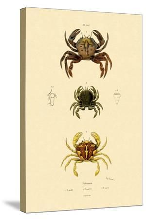 Swimming Crabs, 1833-39--Stretched Canvas Print