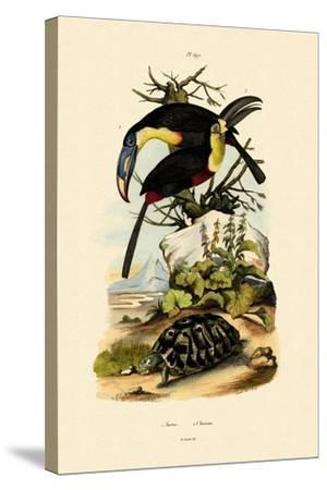 Toucans, 1833-39--Stretched Canvas Print