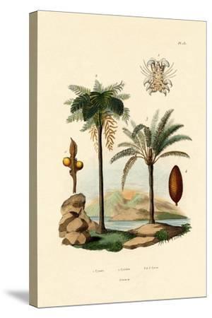 Tree Fern, 1833-39--Stretched Canvas Print