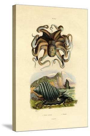 Octopus, 1833-39--Stretched Canvas Print