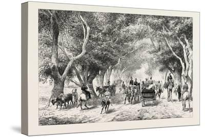 The Avenue at Shoobra, Egypt, 1879--Stretched Canvas Print