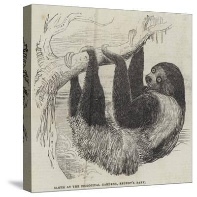 Sloth at the Zoological Gardens, Regent's Park--Stretched Canvas Print