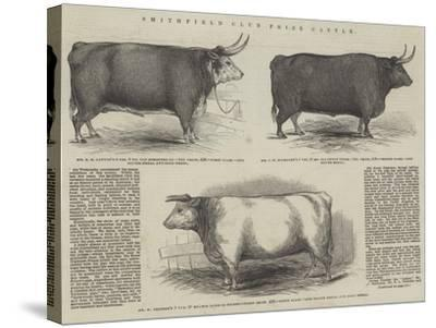 Smithfield Club Prize Cattle--Stretched Canvas Print