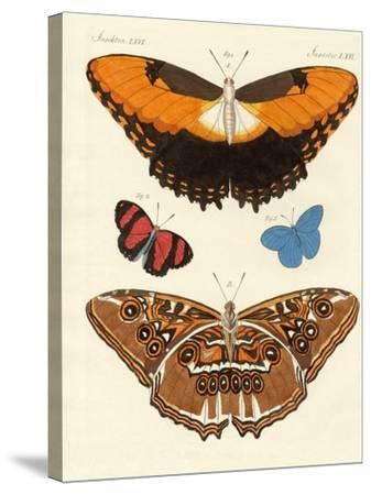 Beautiful Foreign Butterflies--Stretched Canvas Print
