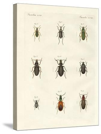 Beautiful German Beetles--Stretched Canvas Print
