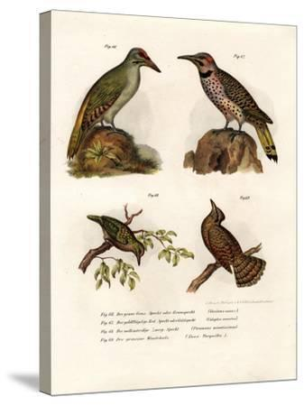 Grey-Headed Woodpecker, 1864--Stretched Canvas Print