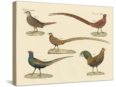Beautiful Pheasants--Stretched Canvas Print