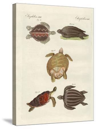 Strange Sea-Turtles--Stretched Canvas Print