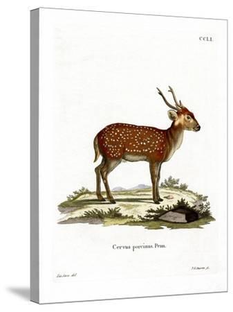 Hog Deer--Stretched Canvas Print