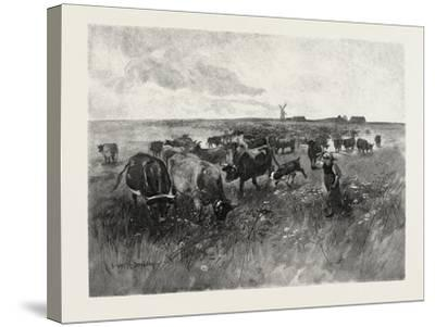 A Mennonite Girl Herding Cattle, Canada, Nineteenth Century--Stretched Canvas Print