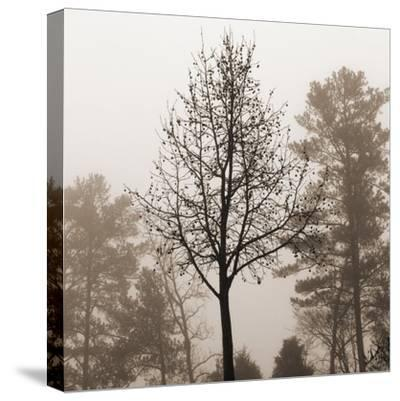 Evening Mist 2 Detail-Marlana Semenza-Stretched Canvas Print
