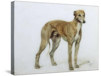 A Fawn Greyhound, 1897-Cecil Charles Windsor Aldin-Stretched Canvas Print