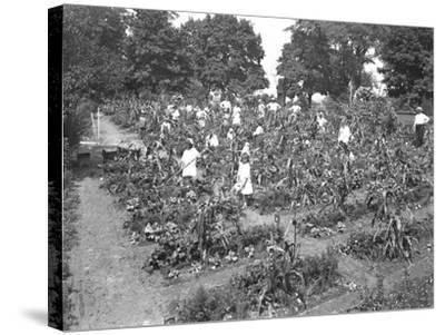 Children Working in the Isham Park School Garden, New York City, August 16, 1915-William Davis Hassler-Stretched Canvas Print