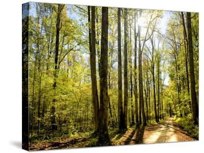 A Fresh New Morning-Danny Head-Stretched Canvas Print